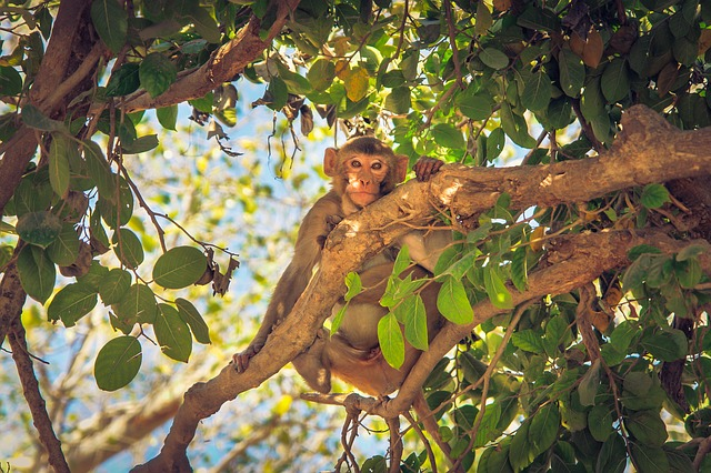 a monkey in a tree representing the serial dater who goes from relationship to relationship