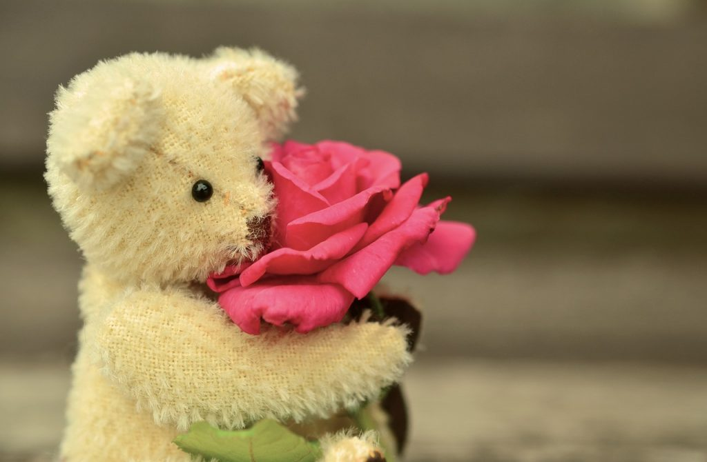 teddy bear with red rose for valentine's day